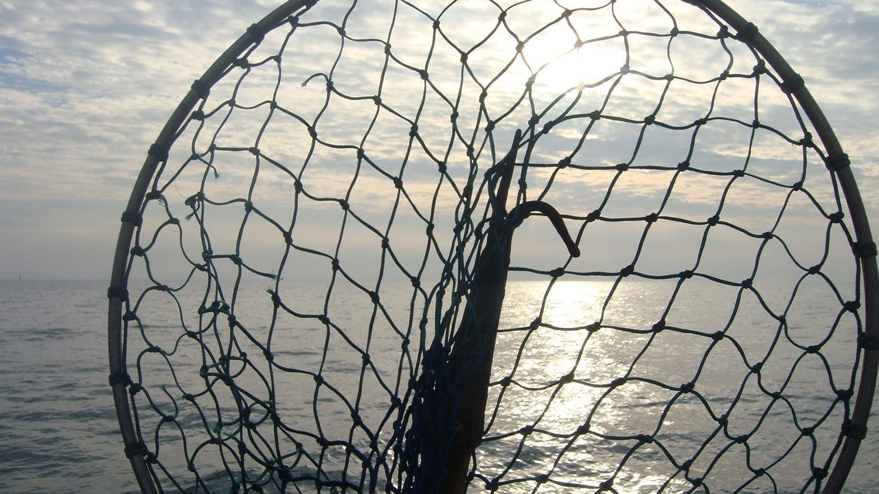ᐅ angelkescher test bester kescher für karpfen raubfisch